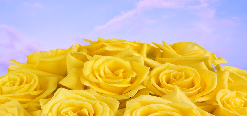bouquet of yellow long lasting roses with the sky in the background
